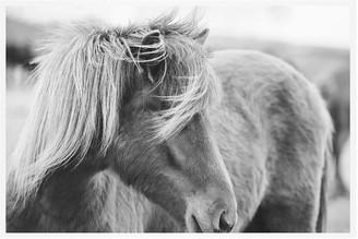 Pottery Barn Rustic Horse by Jennifer Meyers