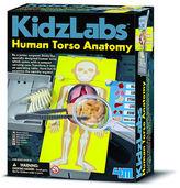 NEW Kidz Labs Human Torso Anatomy Kit