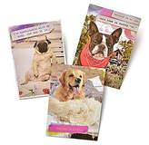 GARTNER STUDIOS Gartner Greetings Pet Humor Greeting Cards, 3 pack, Just For Fun