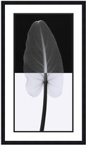 'Calla Leaf' Framed Art Print by Steven N. Meyers