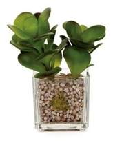 Torre & Tagus Torre And Tagus Glass Potted Echeveria - Jade