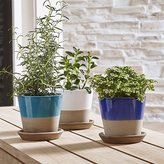 Crate & Barrel Carnivale Mini Planters
