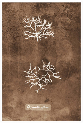 Jonathan Bass Studio Natural Forms Sepia 7, Decorative Framed Hand Embellished Canvas