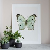Graham and Green Butterfly Print - Green Salamis Parhassus
