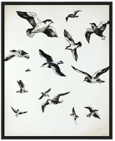 PTM Images For the Birds (Inverse Framed Giclee)