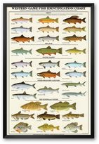 "Art.com Western Gamefish Identification Chart"" Framed Art Print"