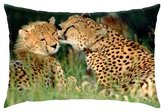 "iRocket - Cheetah love - Throw Pillow Cover (16"" x 24"", 40cm x 60cm)"