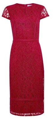 Dorothy Perkins Womens Tall Raspberry Lace Pencil Dress