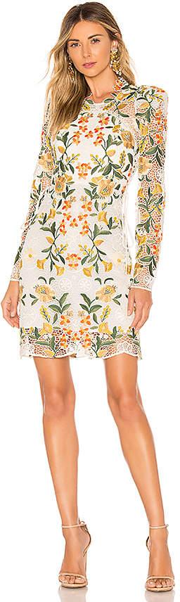 Thurley Vasette Lace Mini Dress