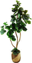Pier 1 Imports Fig Tree in a African Basket Silk Plant