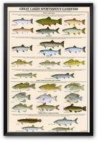 "Art.com Great Lakes Sportsman's Game Fish"" Framed Art Print"