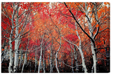 Oliver Gal Autumn Forest (Canvas)