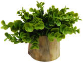 Varick Gallery Faux Naturalist Eucalyptus Bonsai Desk Top Plant in Planter