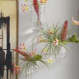 west elm Hanging Bubble Glass Wall Planter