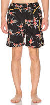 Stussy Bamboo Boardshort in Black
