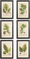 OKA Framed Tree Leaf Prints, Set of 6