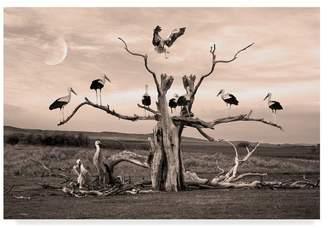 Collection 18 Trademark Fine Art Ata Alishahi 'Nature Collection 18' Canvas Art