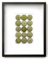 Seafoam Urchins (Shadow Box Frame)
