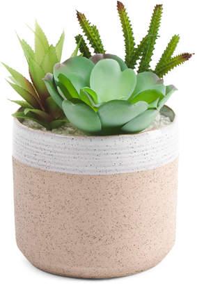 Succulents In Natural Glazed Pot