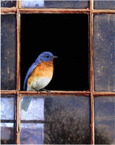 Asstd National Brand Bluebird Window Canvas Wall Art