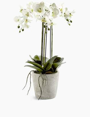Marks and Spencer Large Orchid in Ceramic Pot