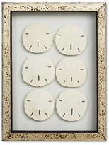 Karen Robertson Framed Mini Sand Dollars V