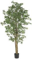 Asstd National Brand 6' Japanese Maple Silk Tree