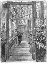 Art.com Charles Darwin (1809-188), English Naturalist, in His Greenhouse Giclee Print - 30x41 cm