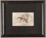 Rejuvenation Hand-Colored Fox Etching c1875