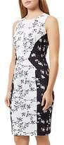 Damsel in a Dress Kelsie Dress, Black