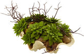 Asstd National Brand Nearly Natural Succulent Garden with Seashell
