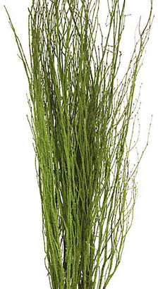 Knud Nielsen Company Set of 30 Moss-Coated Birch Branches - Dried