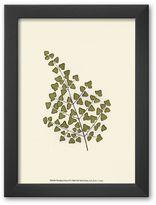 """Art.com Woodland Ferns II"""" Framed Art Print by Edward Lowe"""