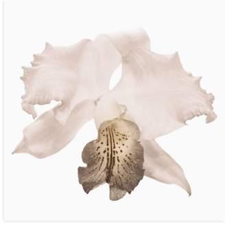 White Slipper Orchid Wall Art
