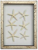 Karen Robertson Framed Mini Starfish IV