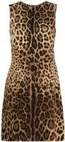 Dolce & Gabbana leopard pattern shift dress