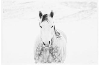 Pottery Barn Winter White Horse Framed Print by Jennifer Meyers