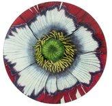 John Derian Decoupage Poppy Plate