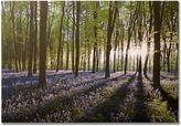 Graham & Brown Bluebell Fields Landscape Canvas Wall Art