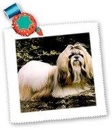 Shih 3dRose LLC qs_507_1 Dogs ShihTzu Tzu - Quilt Squares