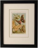 Rejuvenation Framed Chromolithograph of Moths c1915