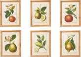 OKA Early Citrus Fruit Prints, Set of Six