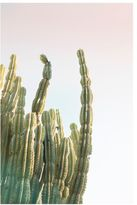 Pottery Barn Bright Cactus Framed Print by Jane Wilder