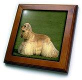 3dRose LLC ft_713_1 Dogs Cocker Spaniel - Cocker Spaniel - Framed Tiles