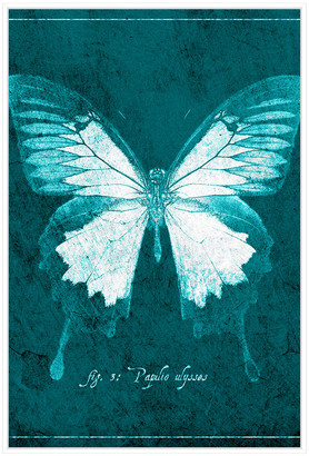 Jonathan Bass Studio Butterfly E, Decorative Framed Hand Embellished Ca