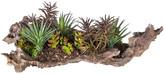 SIA Plant Display