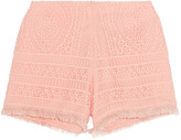 Alexis Eveline fringe-trimmed crocheted shorts
