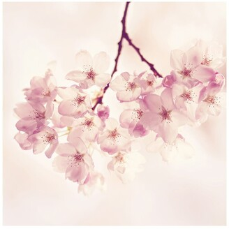 """Marmont Hill Inc. Cherry Blossoms Painting Print on Wrapped Canvas - 48"""" x 48"""""""