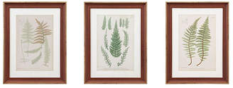 Martha Stewart Lady Fern Collection Single Mat Framed Graphic 3-Pc Set