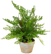 """19"""" Maidenhair in Planter - Faux - The French Bee - green; pot, brown/white"""